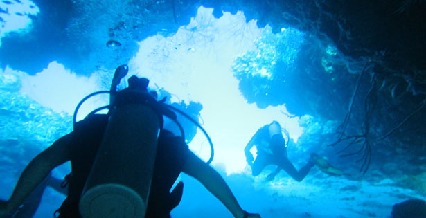 Scuba Diving with Marine Life Divers – Jamaica